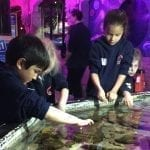 Sea Life Centre KS1 The Towers
