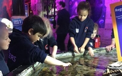 KS1 Visit To The Sea Life Centre